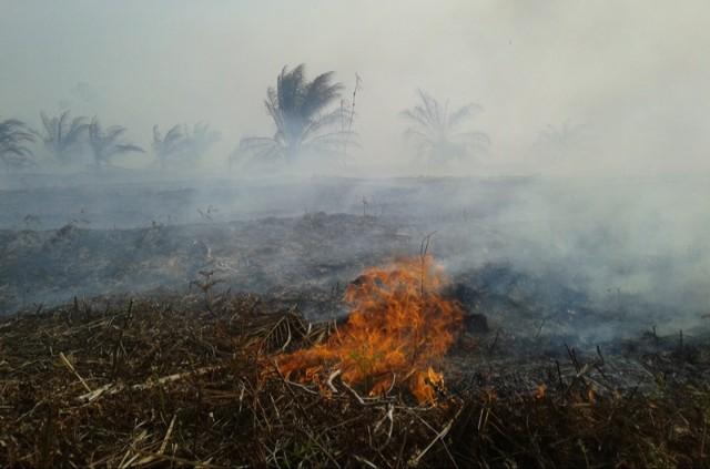 99% Penyebab Kebakaran Hutan dan Lahan Adalah Ulah Manusia