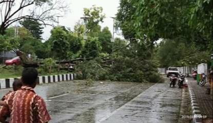 Waspada!, Kota Kupang Terdampak Fenomena Cuaca Squall Line