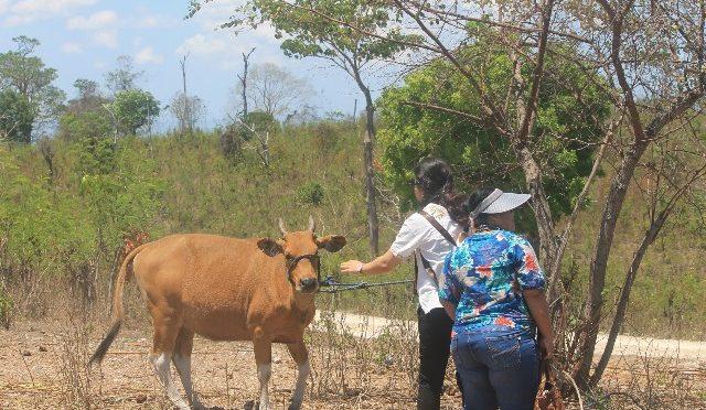 'Field Trip HITPI', Wadah Studi Komparasi Lahan Kering Potensial di NTT