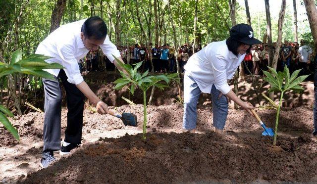 Presiden Jokowi Ajak Masyarakat Pulihkan Hulu DAS dengan Agroforestri